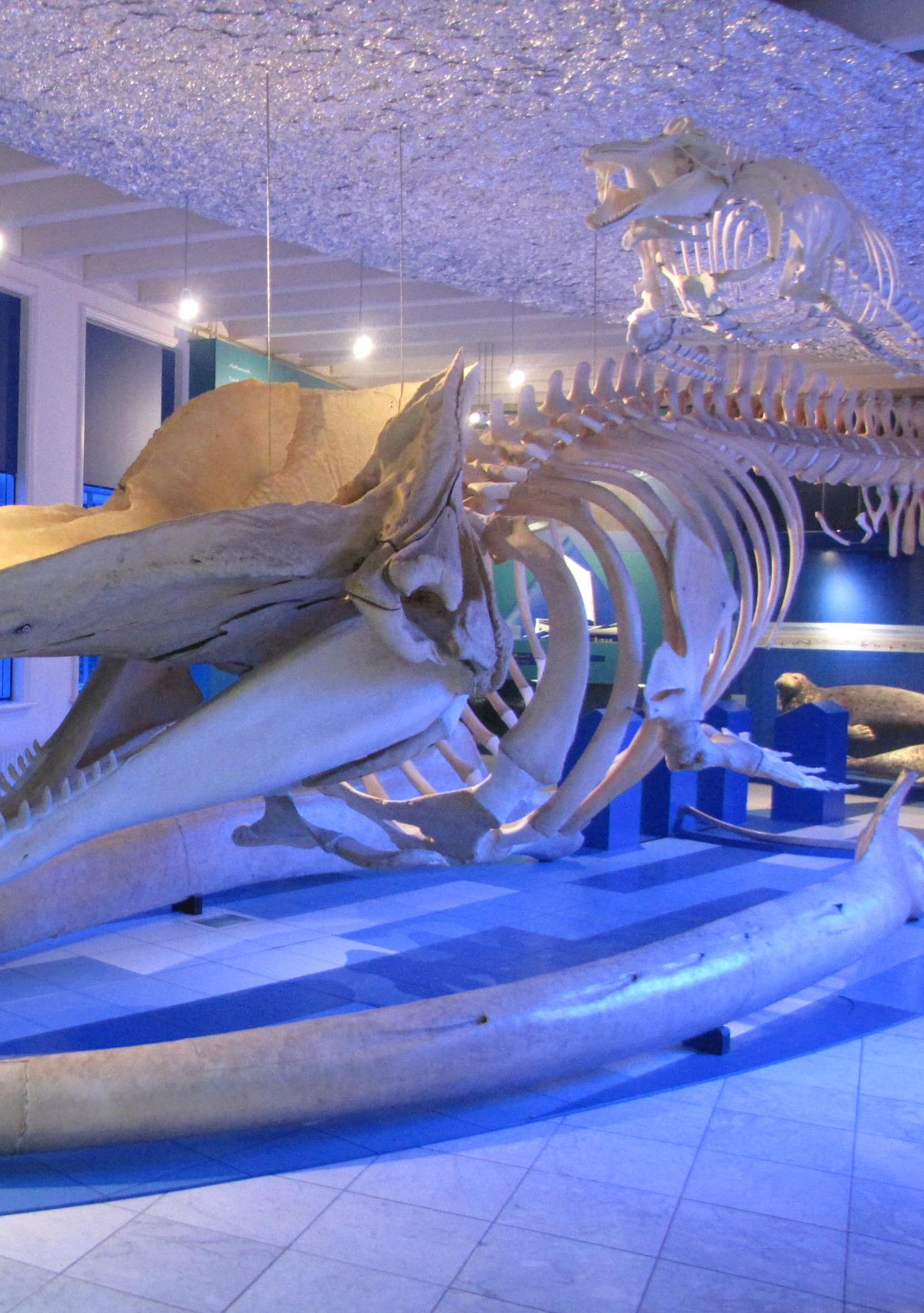 De nieuwe walviszaal